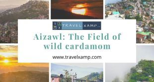 Aizawl: The Field of wild cardamom