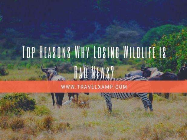 Top Reasons Why Losing Wildlife is Bad News?