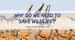 Why do We need to Save Wildlife?