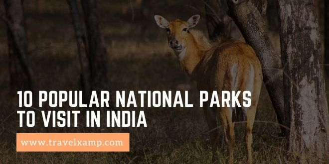 Popular National Parks to visit in India