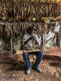 Tobacco farmer in a tobacco hut in Vinales