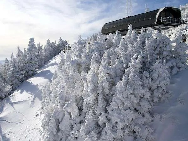 Trees covered in snow at Okemo