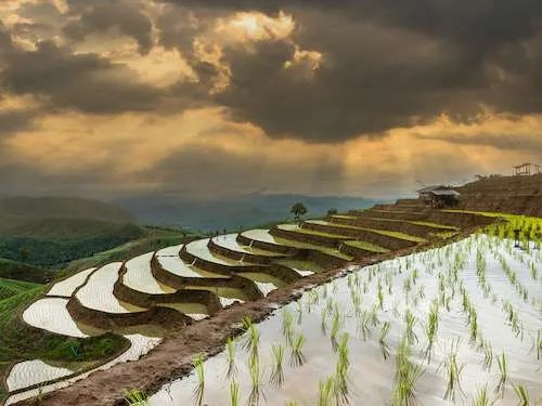 Rice field storm sky Chiang Mai Thailand group travel