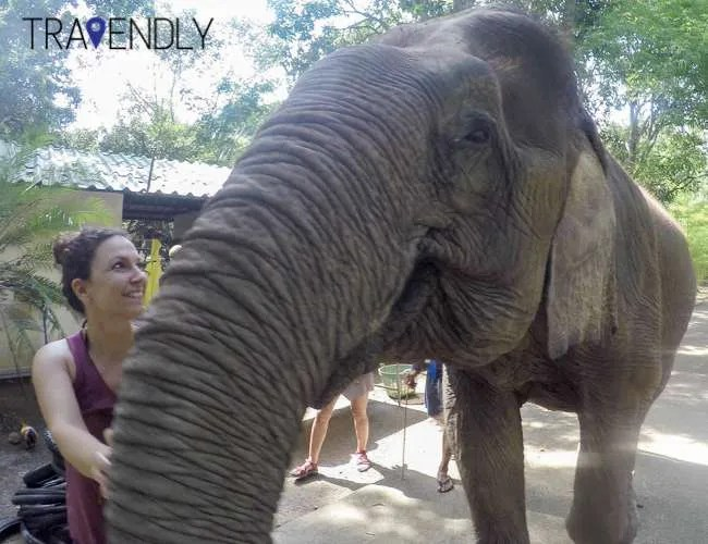 Elephant love sanctuary in Thailand