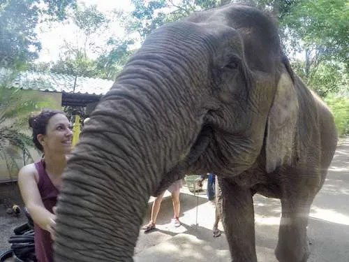 Elephant pure love look Thailand group travel