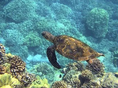 Sea turtle Thailand
