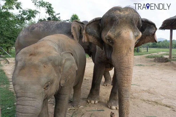 Elephant family at the rescue center in Thailand