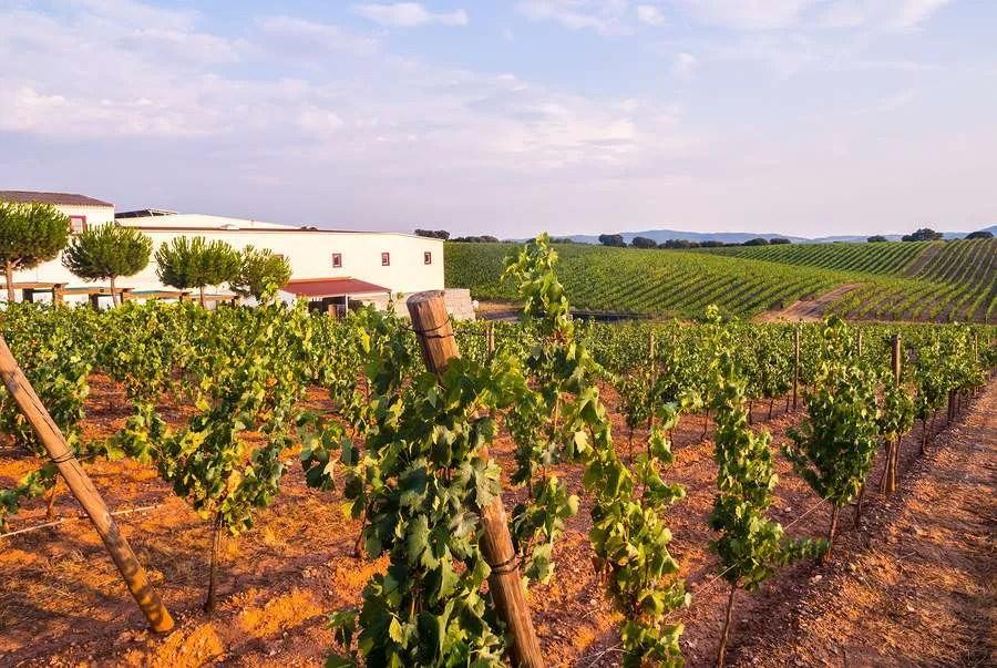 Vineyard and wine estate in Alentejo Portugal