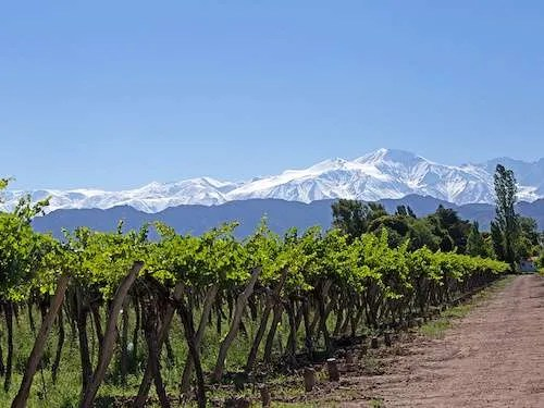 Vineyard in Mendoza Argentina itinerary
