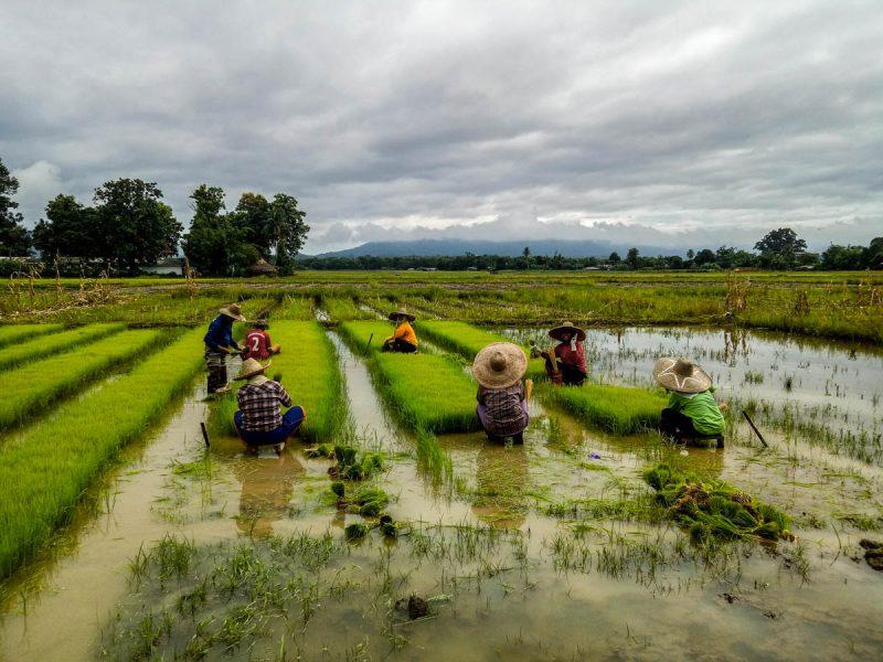 Organic farming in Chiang Mai Thailand