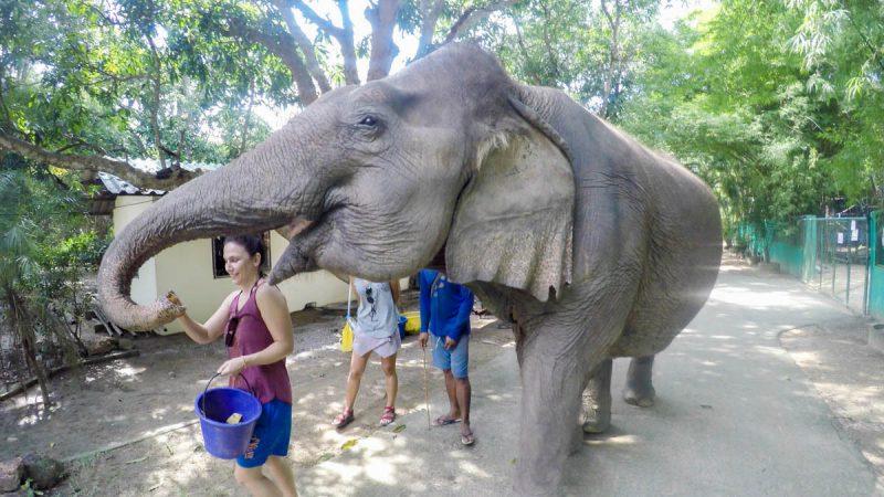 Feeding an elephant in Thailand