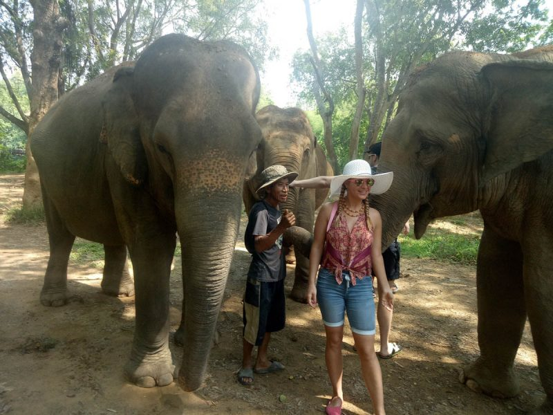 Woman in between two elephants Thailand
