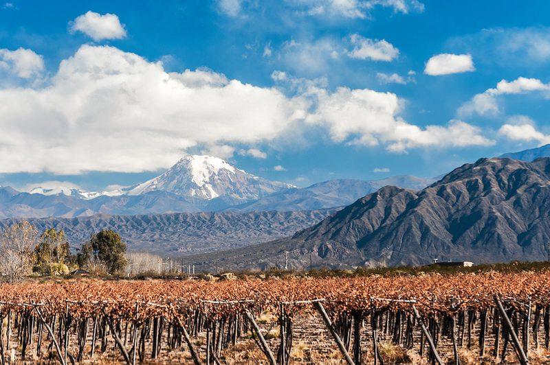 Mendoza vineyard views unreal