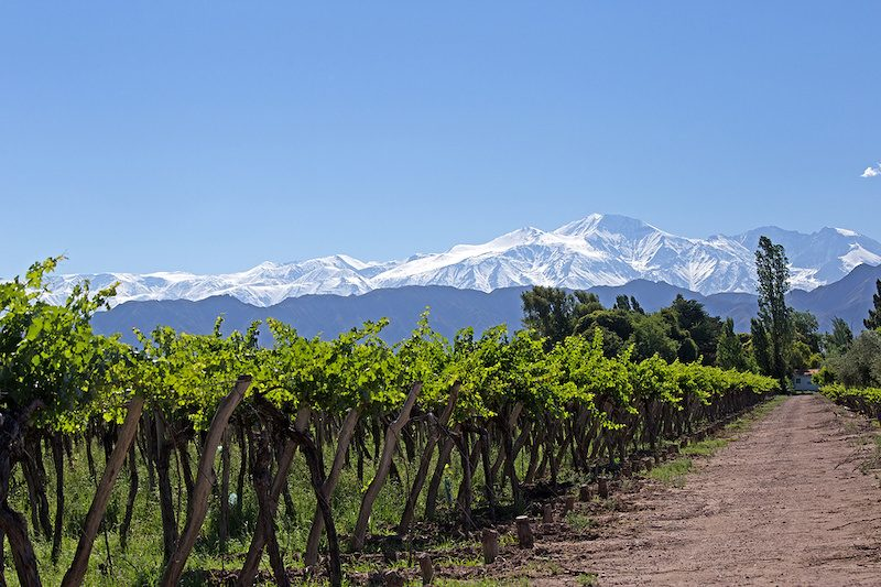 Vineyard in Mendoza Argentina