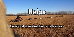 help bénévolat avec des chiens de traineau