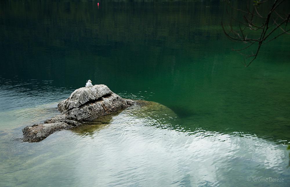 Le lac Bohinj en Slovénie