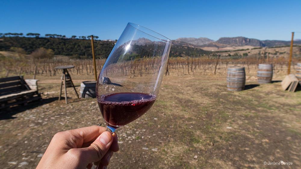 Quoi faire en Andalousie - Déguster vin vignoble