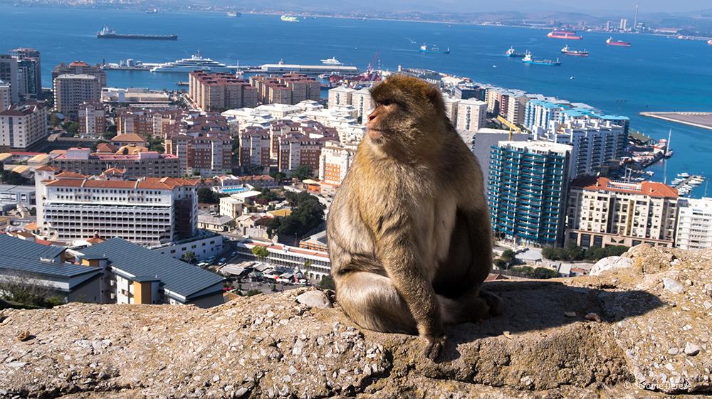 Voyager en solo en Espagne - Voir les singes à Gibraltar
