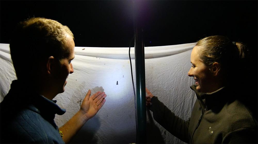 Interview Marie Wild - YouTubeuse de reportages animaliers les papillons de nuit