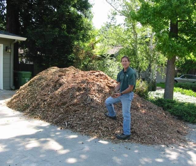 Why Woodchips Covering The Ground With Wood