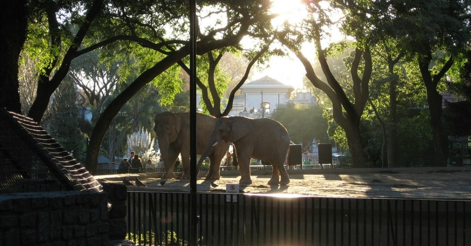 Elephants in their enclosure at the Buenos Aires city zoo. (Photo: jazpdx/flickr/cc)