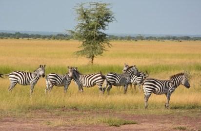 Perdiendo el Serengeti, la tierra de los Masai que durará para siempre
