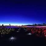 Field of Lights, Walkway
