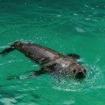Dolphin, Seal & Bird Spotting.