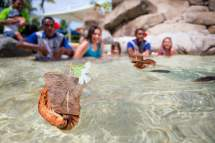 Plan Vacation Denarau Island Fiji - Travel Pacific