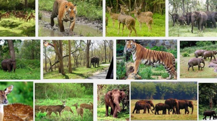 Top 14 Wildlife Sanctuaries In India Trawell Blog