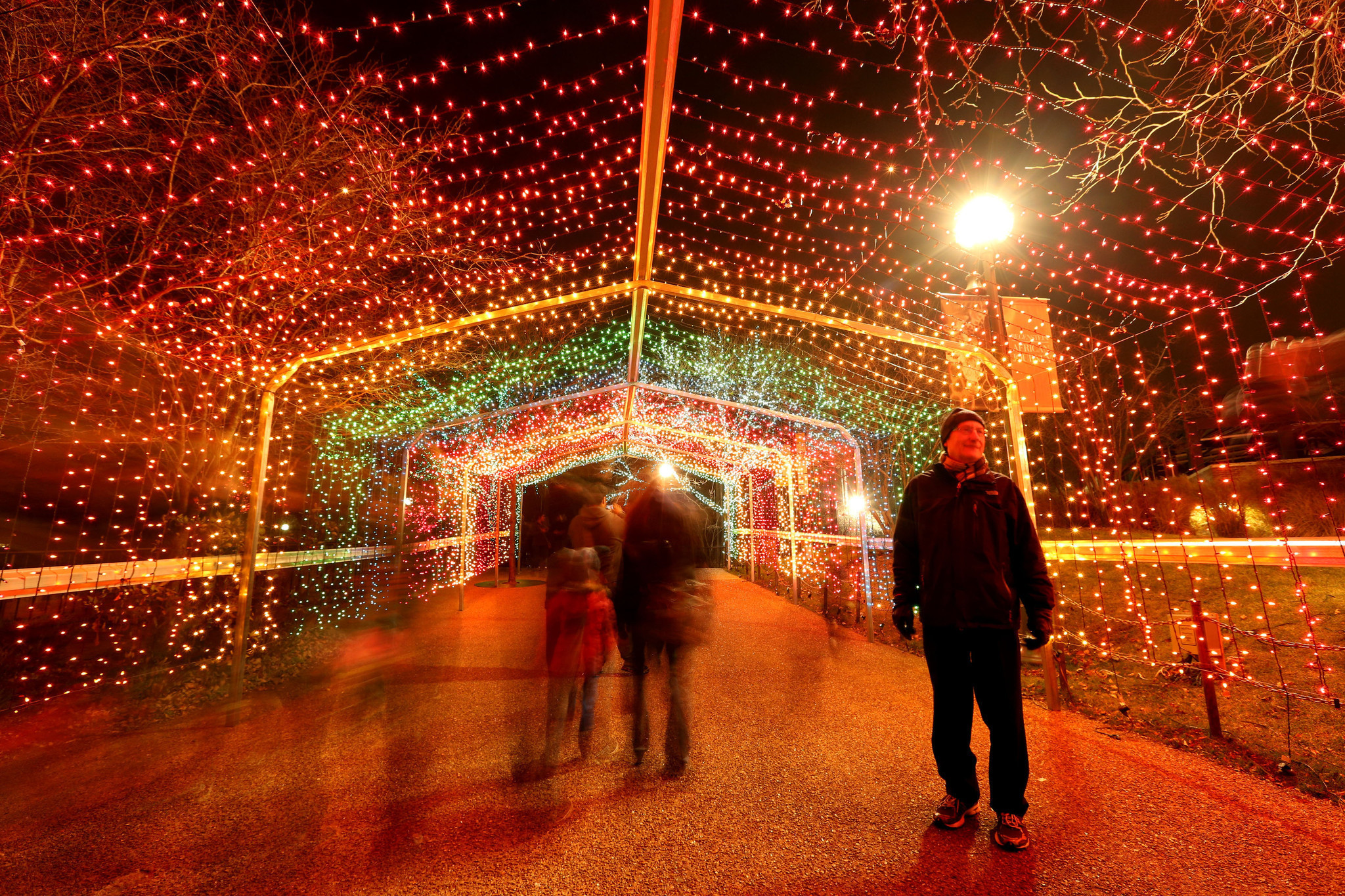 Brookfield Zoo Zoo Lights