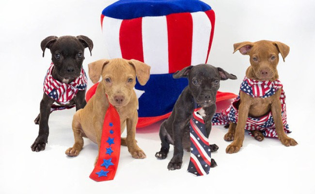 Orange County Animal Services Is Celebrating Independence Day By Offering The 17 76 Adoption
