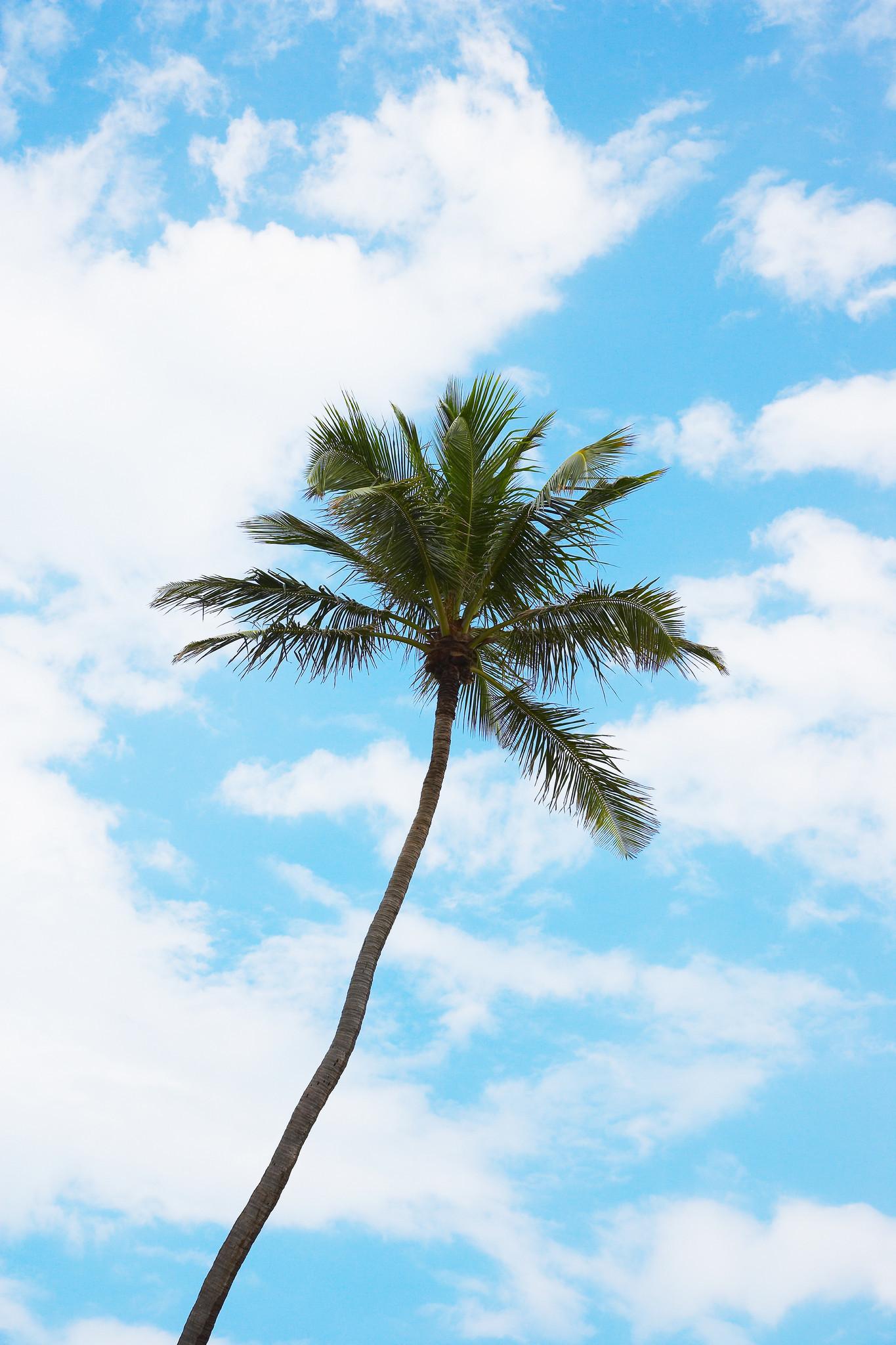 Free trees available on Craigslist  Sun Sentinel