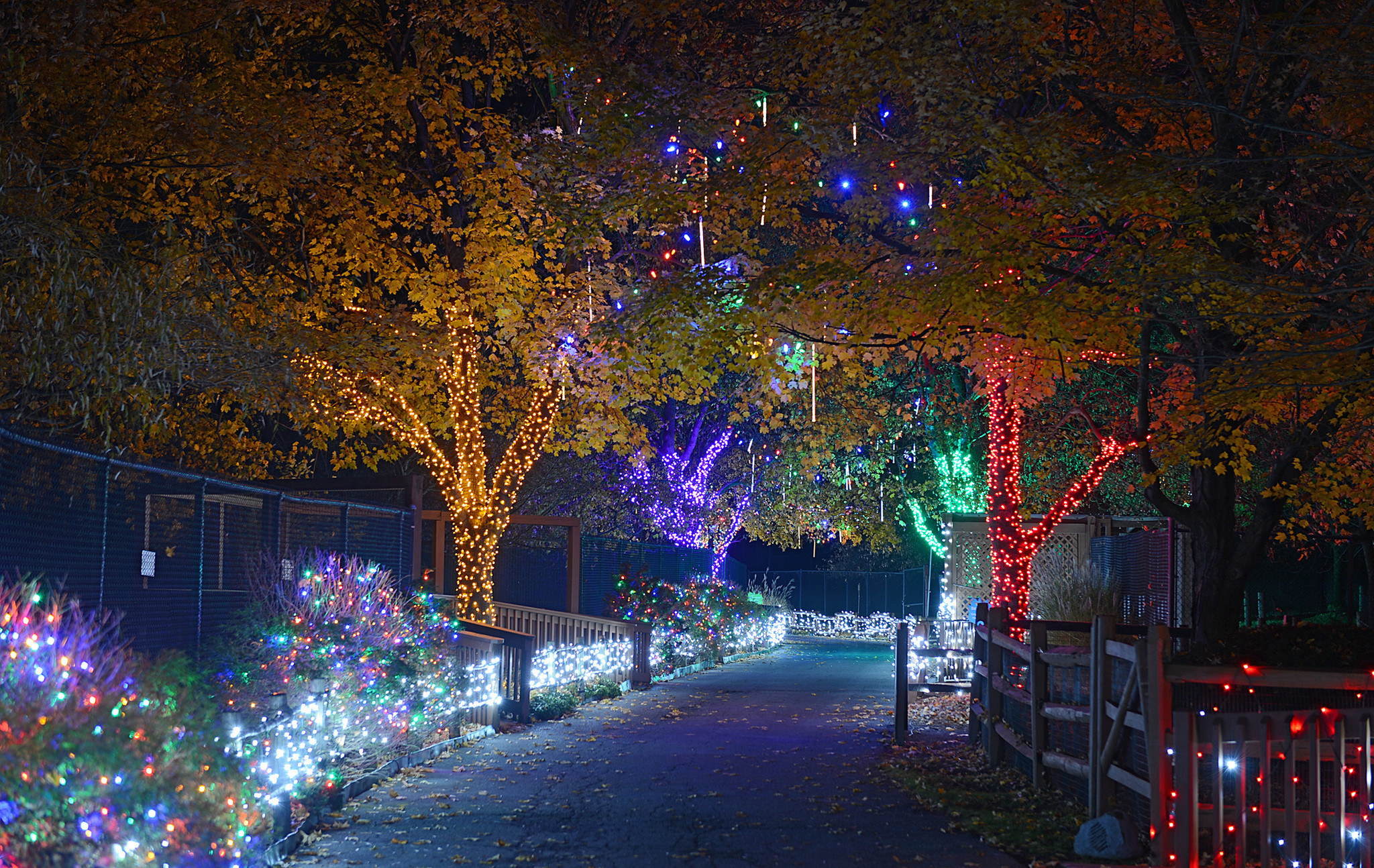 Zoo Lights Reviews