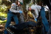 Fighting Zika Virus In Silver Lake Backyard Hunt