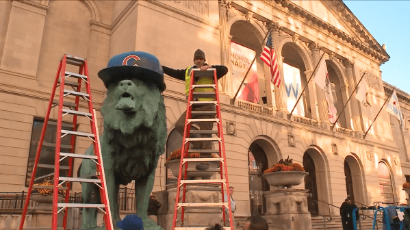 Art Institute Lions Wearing Cubs Hats Time - Chicago Tribune