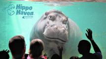 Biggest Highlights Regional Aquariums - Morning