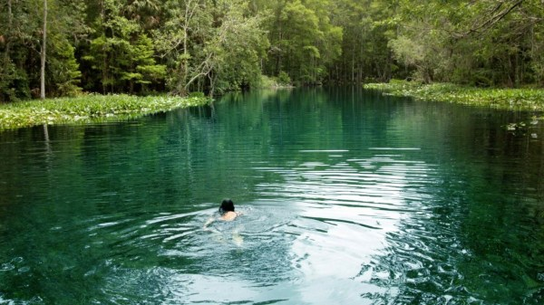 saving florida's landscape - orlando