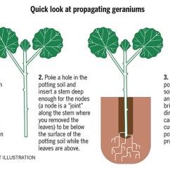 Diagram Of A Flowering Plant With Label 2005 Chrysler 300 Radio Wiring Propagation Made Easy - The San Diego Union-tribune