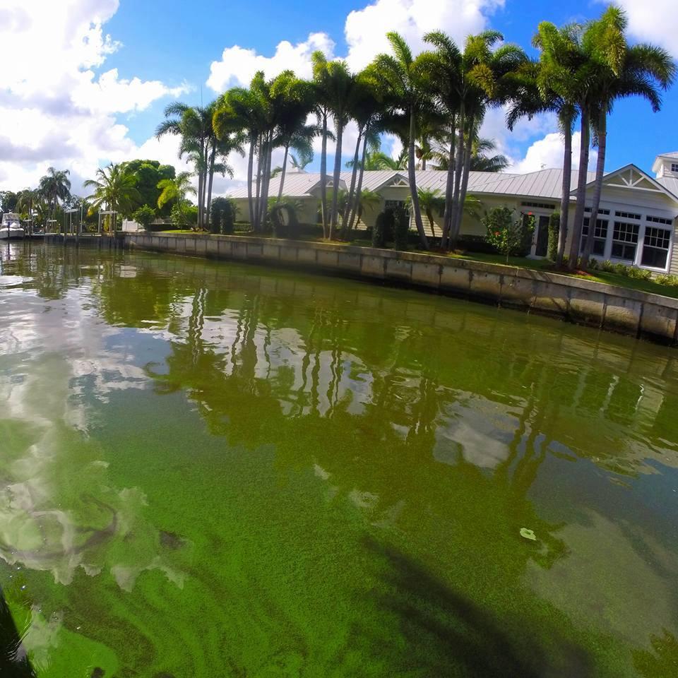 Toxic Green Algae: Awaken State Legislators! State or Federal Someone has got to help! Photo: Jennie Pawlowsky
