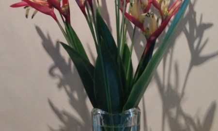 The Shrub Queen: In A Vase on Monday – Heliconias, neat.