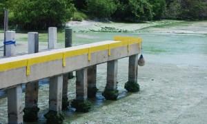 Toxic algae levels