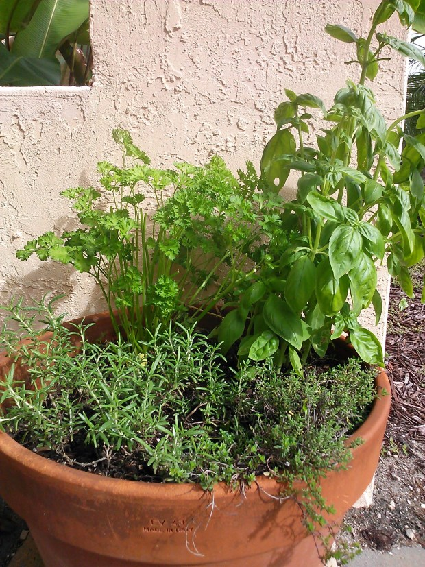 Spice up Your Container Gardens with Herbs