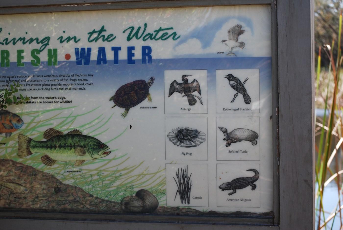 Visitor Center Merritt Island Wildlife Refuge photo: cyndi lenz