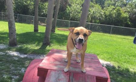 Kody at the dog park