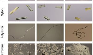 UF/IFAS citizen scientists find microplastics have big presence in coastal waters