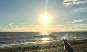 Ft Pierce Dog-Friendly Beach Survey