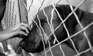 PBC AC&C Holds Strays to Reunite Lost Pets with Owners