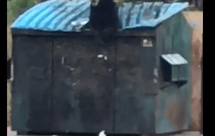 (Video) Bear eating breakfast in a Dumpster