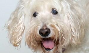 HSTC Pet of the week Feb 16: Joe